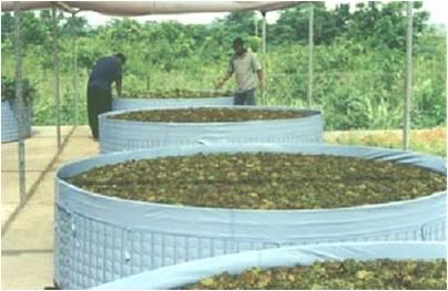 Tanquetas para la reproducción de insectos