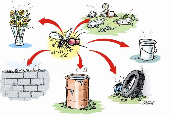 Criaderos comunes del Aedes aegypti
