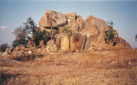 En la reserva de leones Zimbabwe 4