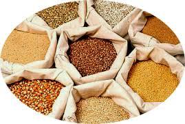 La producción de semillas es vital