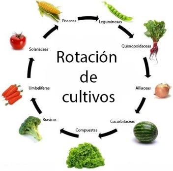 La rotación de cultivos es esencial en una producción agrícola moderna