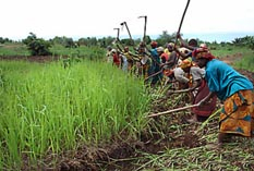Mujeres trabajando en campo en Burundi