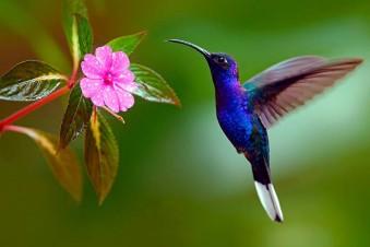 El colibrí en acción
