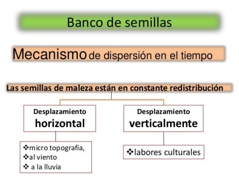 Mecanismo de dispersión de semillas