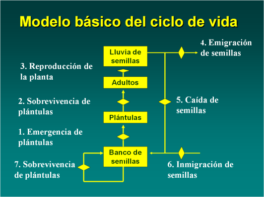 modelo-basico-del-ciclo-de-vida-de-una-planta