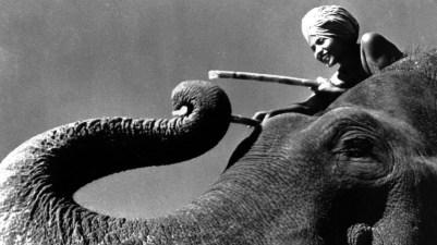 sabu-sobre-un-elefante