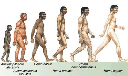 Evolución de Homo spp.