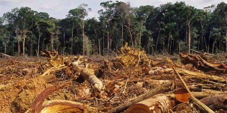 Amazonas en destrucción