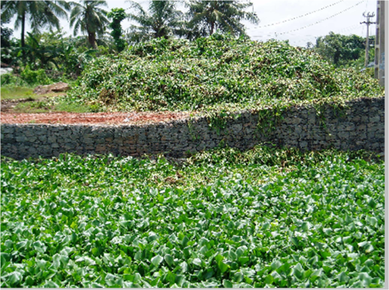 Remoción de WH en Colombo, Sri Lanka