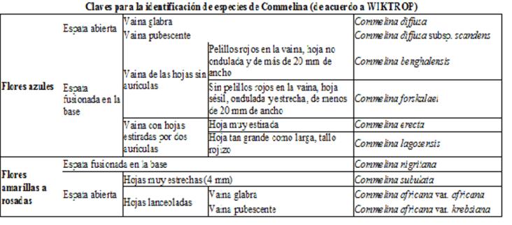 Clave identificación Commelina