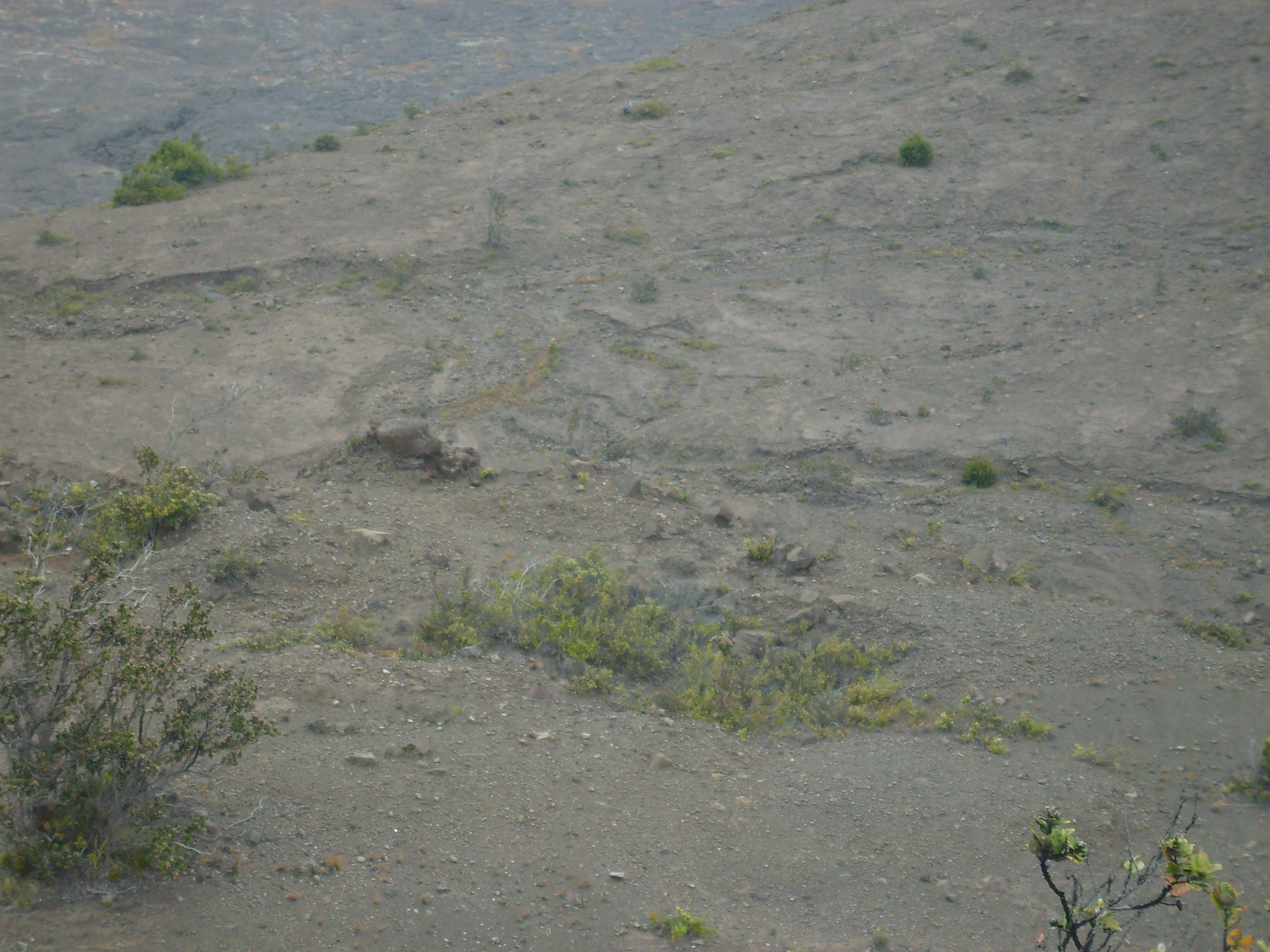 Sustrato a partir de lava