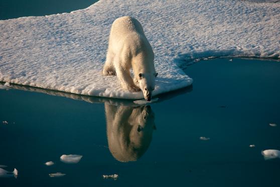 Ártico.png