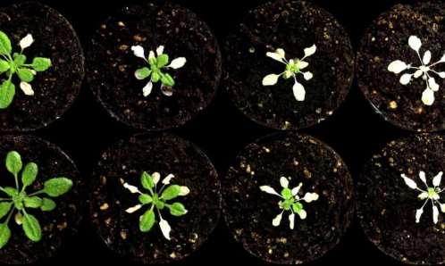 Plantas impermeabilizadas.jpg